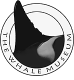 The Whale Museum Logo